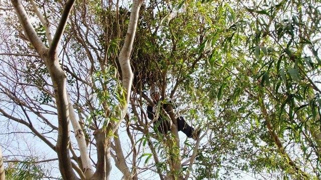 木に登って・・・ ~~~ヾ(〃^∇^)o キャー!ファイトォー!!