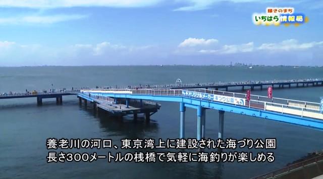 いちはら情報局 「オリジナルメーカー海づり公園」 釣り!(* ̄ー ̄)_/|
